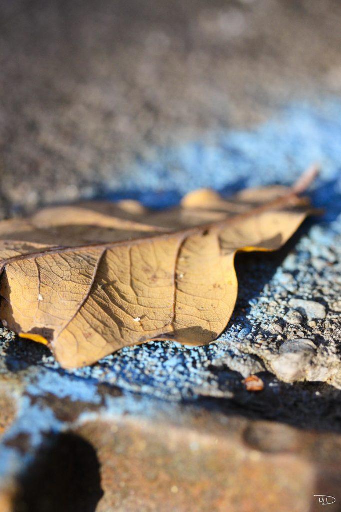 Macro - Nature - feuilles mortes